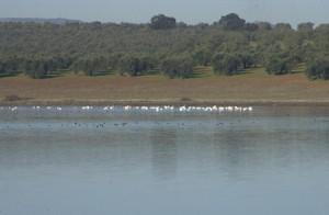 Reserva Natural de la Laguna de la Ratosa